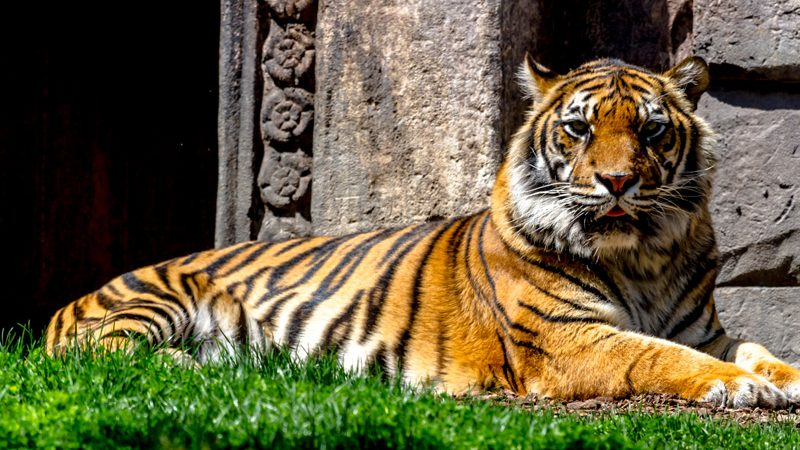International Tiger Day 2019: Nepal Ahead of World Countries in Tiger Population